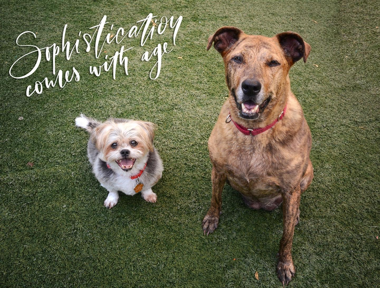 two dogs smiling at the camera