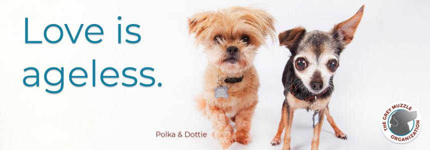 Love is Agelss with Polka and Dottie