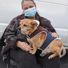 dog sitting on masked women's lap