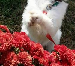 White terrier mix Ginger in front of red flowers