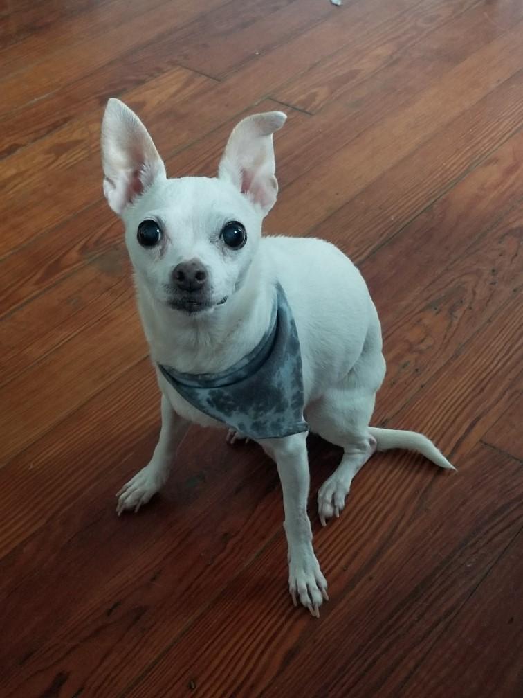 small white dog sitting